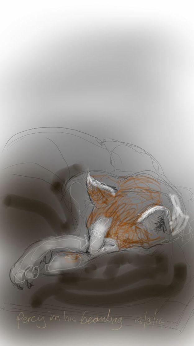 Percy Cat, sleeping