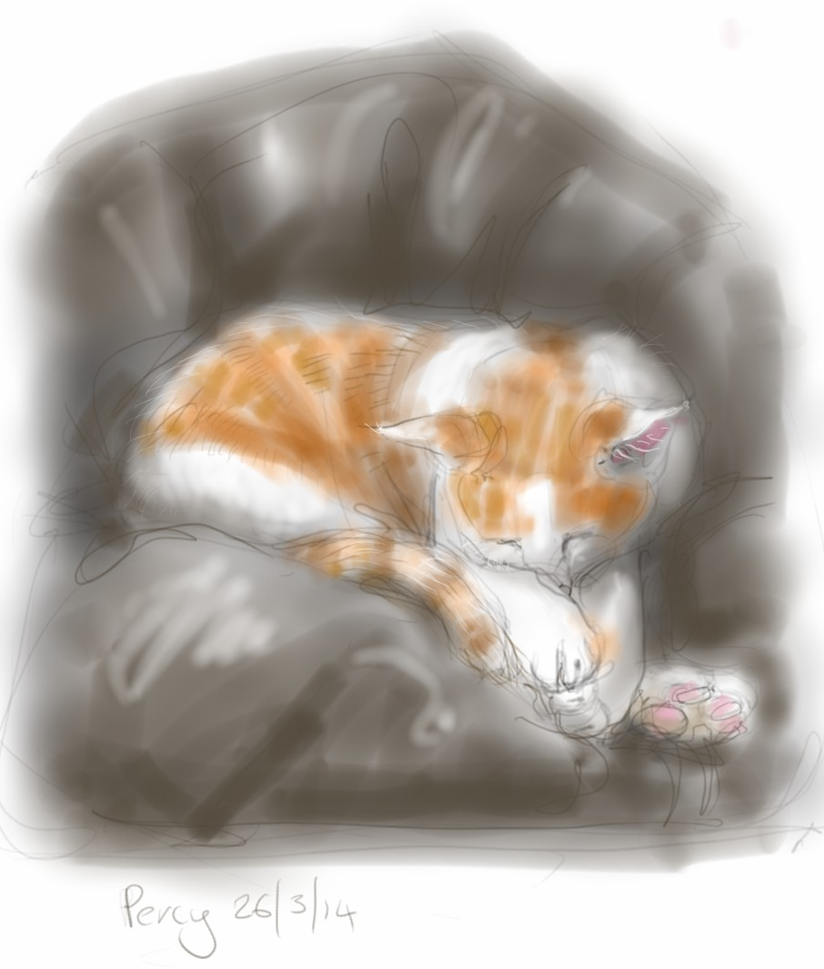 cat sleeping in a beanbag