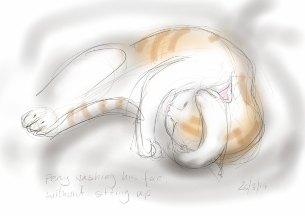 Cat washing - sketch