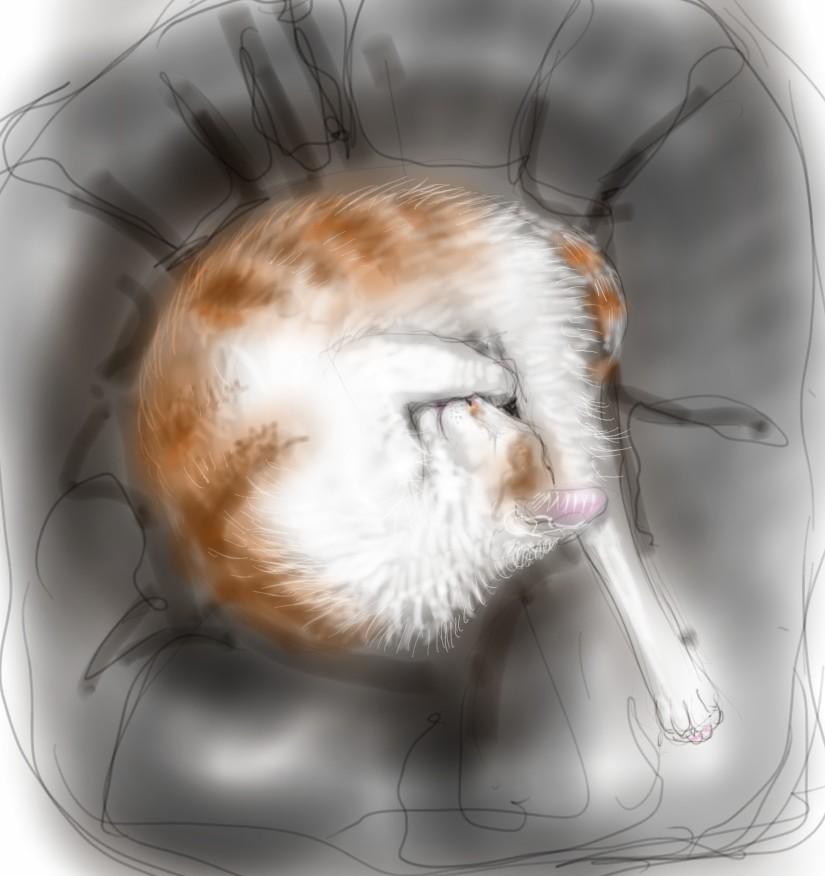 Percy Cats long leg