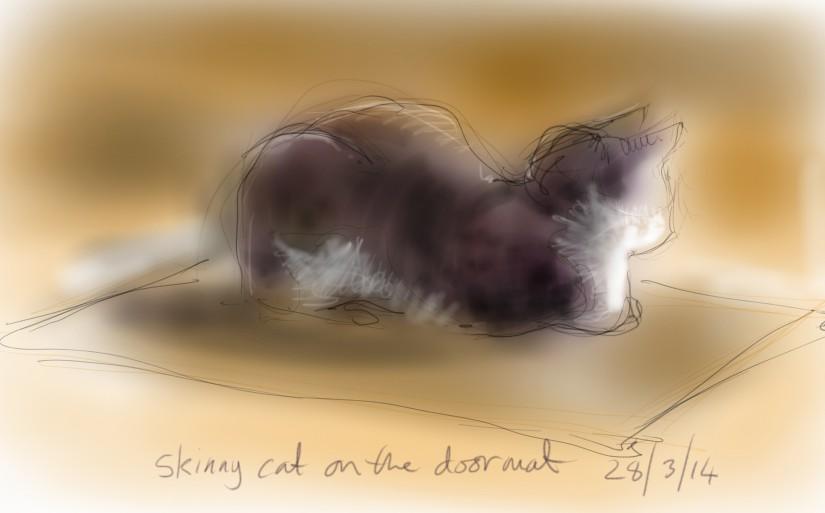 skinny cat sitting