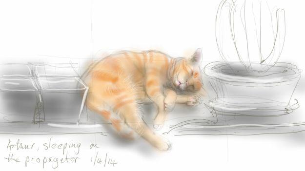 Arthur Cat on the propagator 2
