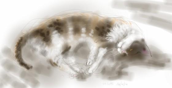 Stiletto Cat, sunbathing