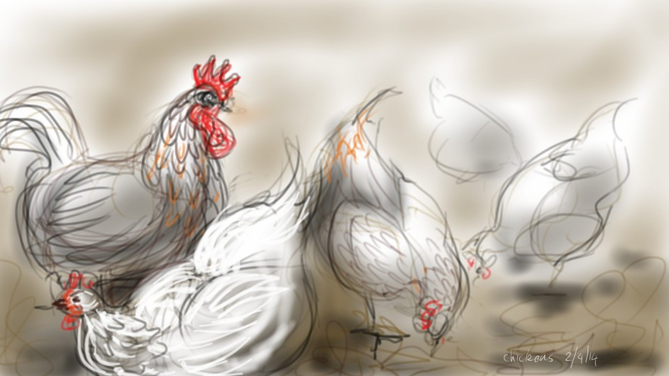 chickens pecking