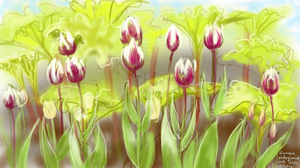 tulips and gunnera