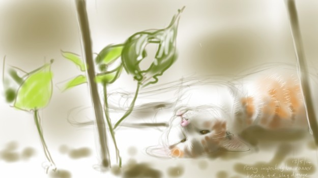 Percy Cat and the Runner Bean seedlings