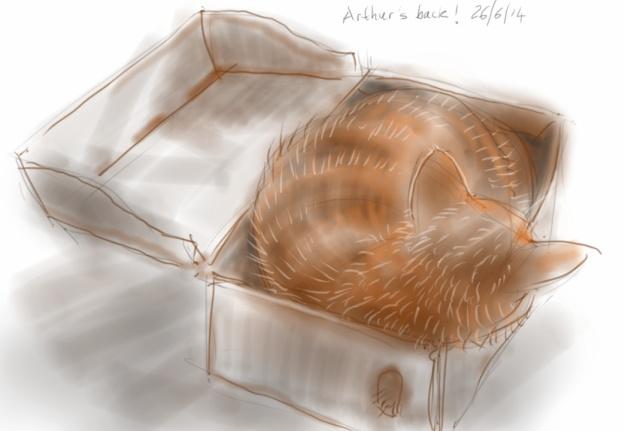 Arthur cat in a box again