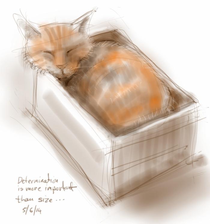 Bonsai Cat