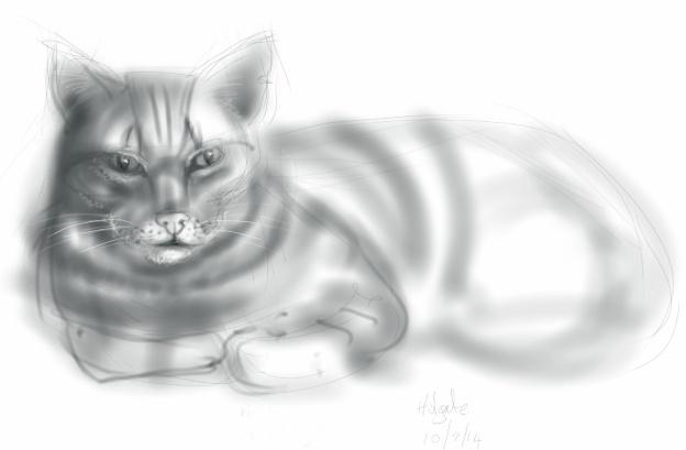 Holgate Cat