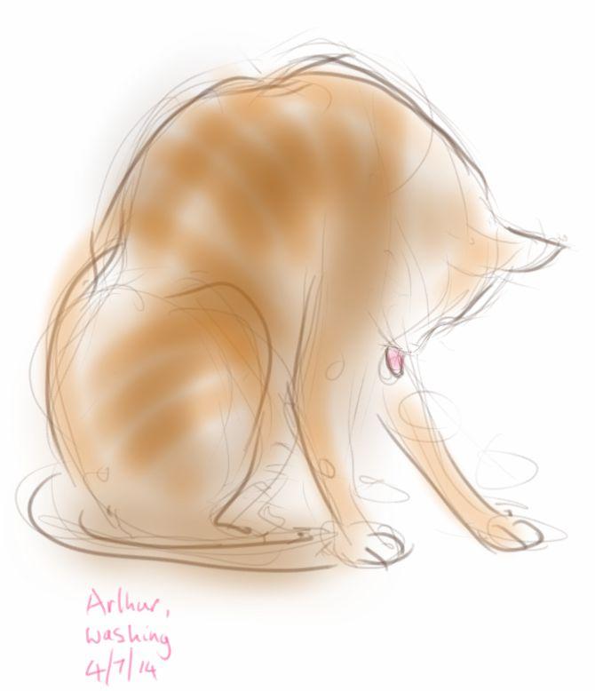 Arthur Cat, washing
