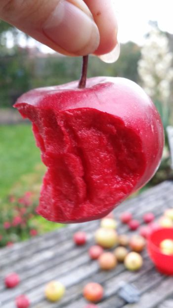 'Red Love' Apple