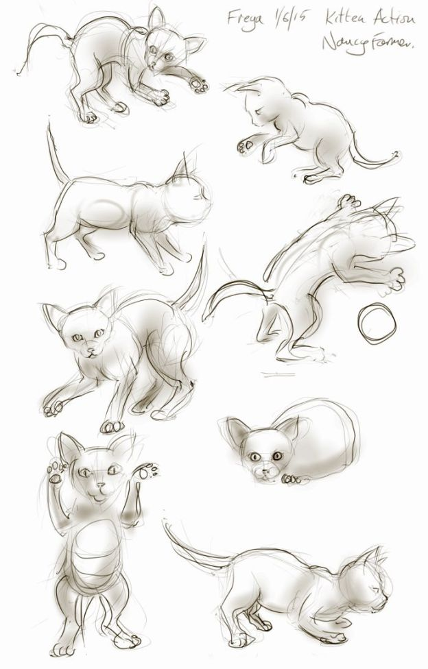 Kitten sketches