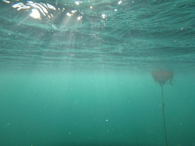 Vobster underwater